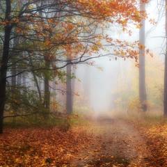 Средь духоты и павших листьев в туманной прелести своей