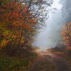 Прокрался холод в лес осенний