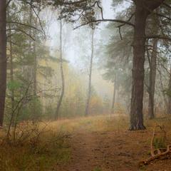 Туман колдует во лесу