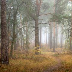Околдован, очарован лес туманом весь окован