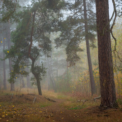 Грибной туман окутывал леса