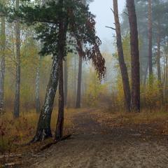 Затуманены лесные дали