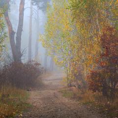 И колдовством тумана лес окутан