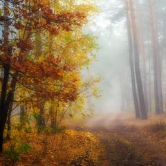 Белый туман октября