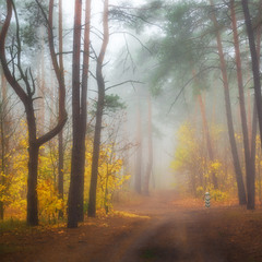 Колдовство осеннего тумана