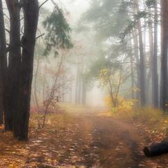 В глубине октябрьского леса