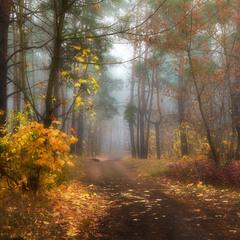 Время опавших листьев