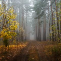 Грибные тропы октября