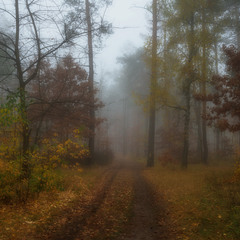 В сыром лесу среди холодного тумана