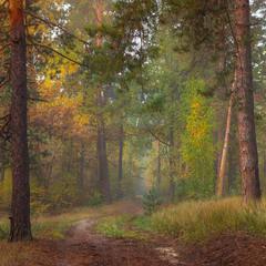 Лес, точно терем расписной