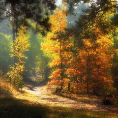Картины осень рисовала...