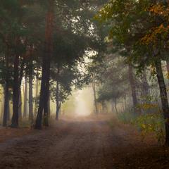 Туманное утро в лесу, октябрь