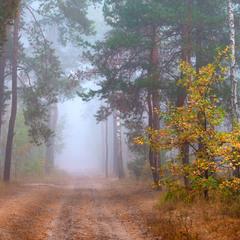 Очарование туманного леса
