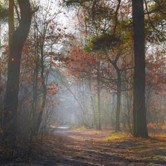 Теплий листопад