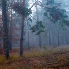 Серый день раскрашенный туманом