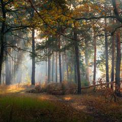 В бесплотной дымке лес тонул