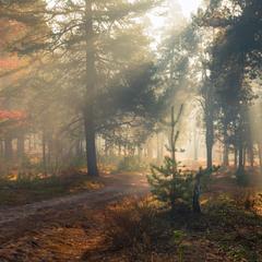 Когда в лесу тепло и сыроежки под ногами