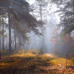 Ноябрьский рассвет