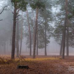 Туманные чертоги