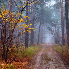 Туманом кроет лес ноябрьский
