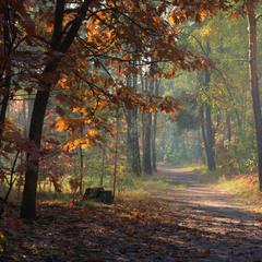 Солнечное утро октября