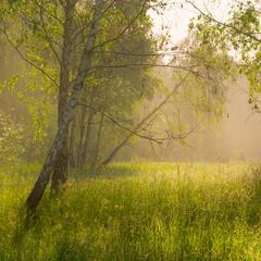 Курится утренний туман по тихим рощам и долинам
