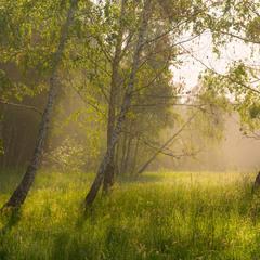 Нежность майского утра