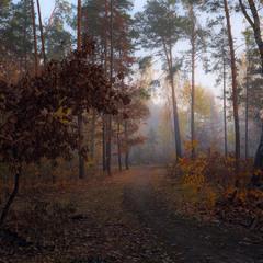 Рассвет октябрьский холоден и грусен