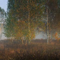 Октябрьское утро на лугу