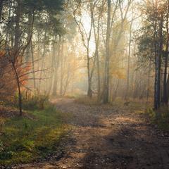 Обласкан светом лес осенний