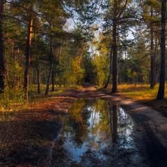 Осенним ливнем лес умыт