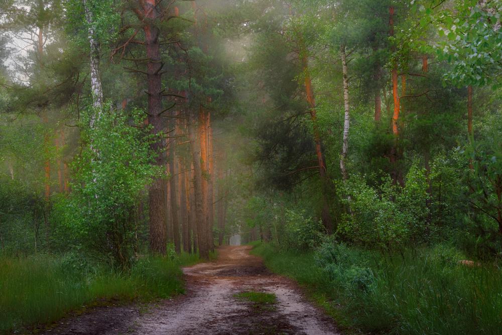 Сказочный лес с тропинкой картинки