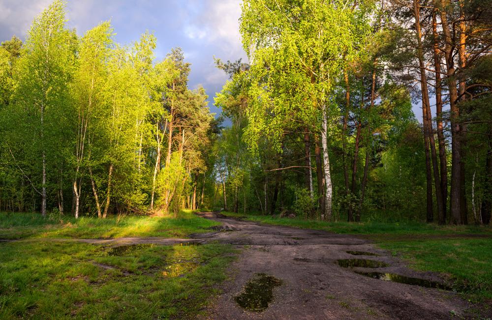 фото весенних лесных пейзажей