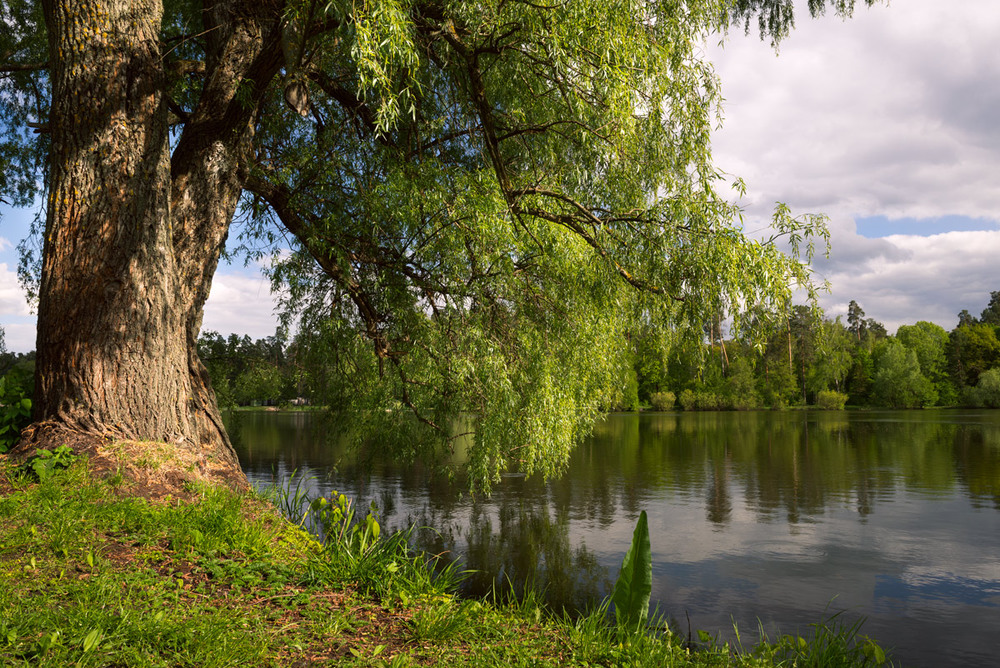фото тополя на берегу реки накидку нужно