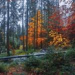 Вкрай важливо,  коли стрінеш у лісі яку пожежу, - не перечепитися через колоду й не зазнати кривди