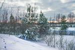 Січень в Києві із снігом, який нападав, і котиками, які розпустилися.