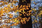 Буває, осінь так світиться, що аж в очах мерехтить.