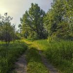 Ранок влітку після дощу, життя буяє. Хочеться кудись дітися, хоча б ось по цій дорозі.