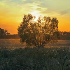Увечері за селом загоряються кольорові поля, небеса, спогади.