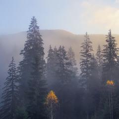 Туманна світлина