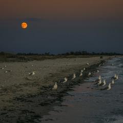 Відпочивальники уночі прийшли до води – подивитися на хвилі.