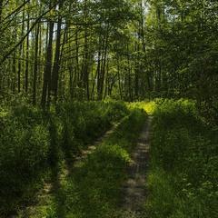 У весняному лісі зранку прохолодно.
