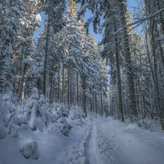 """""""На півшляху свого земного світу Я трапив у похмурий ліс густий Бо стежку втратив, млою оповиту"""""""