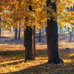 Восени світло й радісно буває чогось.