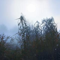 За туманом нічого не в-и-и-и-дно.