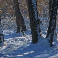 На Малому Небесному Колі завжди є місце для Великого Дерева.