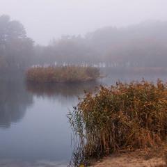 Туманне життя триває досі на острові закоханих качок. Вогко.