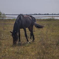 Коник ходить біля озера, походжає - туди-сюди поглядає, траву щипає.