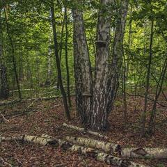 """Інколи в лісі зводять пам'ятники """"Незламності духу Лісовиків""""."""