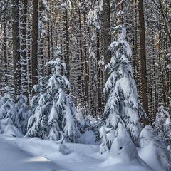 В лісі бувають прості радості: постояти, подивитися, піти далі.